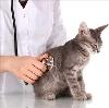 Ветеринарные клиники в Поназырево